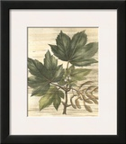 Weathered Maple Leaves II Prints by Gerard Paul Deshayes