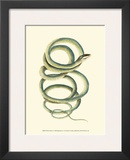 Vibrant Snake II Posters by Frederick P. Nodder