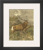 Small Red Deer Art by Friedrich Specht