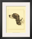 Danchin Cocker Spaniel Print by  Danchin