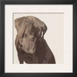 Chocolate Labrador Poster by Emily Burrowes
