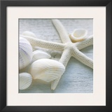 Driftwood Shells III Poster by Bill Philip