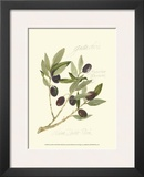 Gaeta Olives Prints by Elissa Della-piana