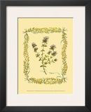 Thyme Posters by Wendy Russell