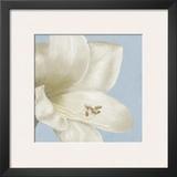 White Amarylis I Posters by Linda Wood