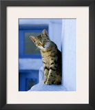 Greek Cat Prints by  Hubert & Klein