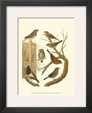 Canaries and Cage Birds IV Prints by  Cassel