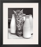 Cat with Bottles of Milk Posters by Paul Kaye