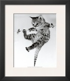 Kitten on a Clothes Line Print by Erik Parbst