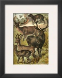 Deer Poster by Henry J. Johnson