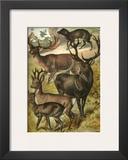 Deer Poster by Henry J. Johnson