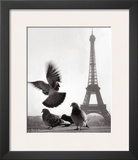 Eiffel Tower with Pigeons, Paris Prints by Elise Hardy