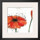 Not a California Poppy III Prints by Chris Paschke