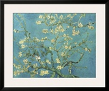 Almond Branches in Bloom, San Remy, c.1890 Framed Giclee Print by Vincent van Gogh