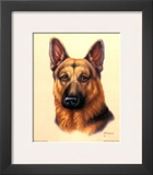German Shepherd Posters by Judy Gibson