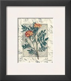 Calendula Prints by Julie Nightingale