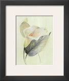Calla Lily III Posters by Paul Hargittai