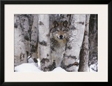 Mountain Ranger Posters by Art Wolfe