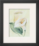 Calla Lily I Posters by Paul Hargittai