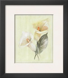 Calla Lily IV Prints by Paul Hargittai