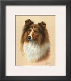 Sheltie Posters by Judy Gibson