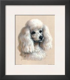 White Poodle Prints by Judy Gibson
