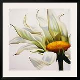 Daisy Breeze Prints by Carolina Alotus
