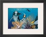 Coral Garden, Hawaiian Dolphin Art by Mark Mackay