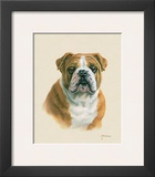 English Bulldog Art by Judy Gibson