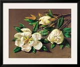 Magnolias Prints by Vladimir Tretchikoff