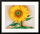 Sunflower Posters by Georgia O'Keeffe