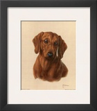 Miniature Dachshund Posters by Judy Gibson