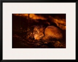 Peace in the Forest Prints by Jim Brandenburg