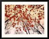 Red Maple and Autumn Sky Prints by Raymond Gehman