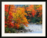 Stream in Autumn Woods Posters