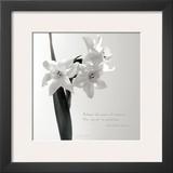 Daffodil Secrets Prints by Deborah Schenck