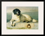 A Distinguished Member Of The Humane Society Prints by Edwin Henry Landseer