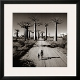 Allee des Baobabs Posters by Chris Simpson