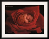 Jake in Red Rose Poster by Anne Geddes