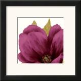 Grandiflora Blush II Poster by Linda Wood