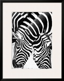 Two Zebras Posters by Paolo Penuchetti