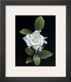 Gardenia Glory Art by Rosemarie Stanford