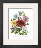 Hibiscus Prints by Jane W. Loudon