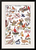 State Birds of the United States Posters