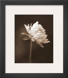 Sepia Flower I Posters by Gail Peck