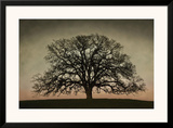 Majestic Oak Framed Giclee Print by David Winston