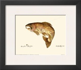 Brown Trout Art by Teri Renee Blehm
