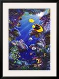 Angelfish of the Caribbean Prints