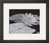 Droplets on Water Lilly Print by Dennis Frates