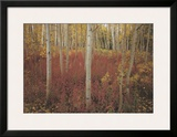 Discovery: Aspen Trees Poster